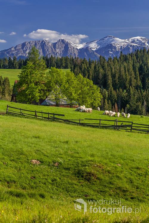 Wiosenny widok na Tatry Zachodnie z Czerwiennego.