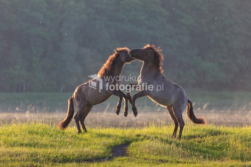 Koniki Polskie, Roztoczański Park Narodowy