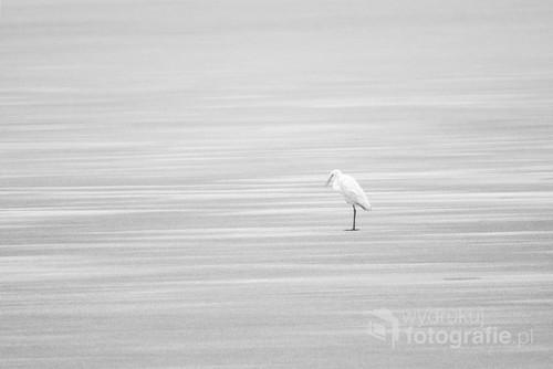 Fotografię wykonałam w lutym 2019 r. podczas porannej wędrówki z aparatem wokół jeziora Krajskie.   Zdjęcie zostało wyróżnione w międzynarodowym konkursie fotograficznym Monovisions 2019 oraz będzie wystawione podczas 8. Foto Art Festival w Bielsku Białej.