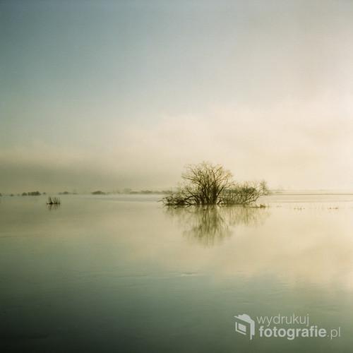 """Biebrzański Park Narodowy Kwiecień 2017 Fotografia wykonana o wschodzie słońca, analogowym, średnioformatowym aparatem na filmie FujiFilm NS 160PRO.  Jako część cyklu nagrodzona w: - INTERNATIONAL PHOTOGRAPHY AWARD 2017 (IPA 2017) – wyróżnienie w kategorii """"Nature-Tree"""" oraz  """"Fine Art: Landscape"""".  - NEUTRAL DENSITY PHOTOGRAPHY AWARDS 2017 (ND AWARDS 2017) – wyróżeninie w kategorii """"Nature: Other"""".  - FORUM's PHOTOGRAPHER OF 2017 SIGMA Photographer's Forum's 37th Annual Spring Photography Contest – finalista limitowanej edycji albumu. KONKURS NATIONAL GEOGRAPHIC POLAND """"FOTOGRAFICZNE PORANKI"""" 2017 – finalista i uczestnik warsztatów fotograficznych."""