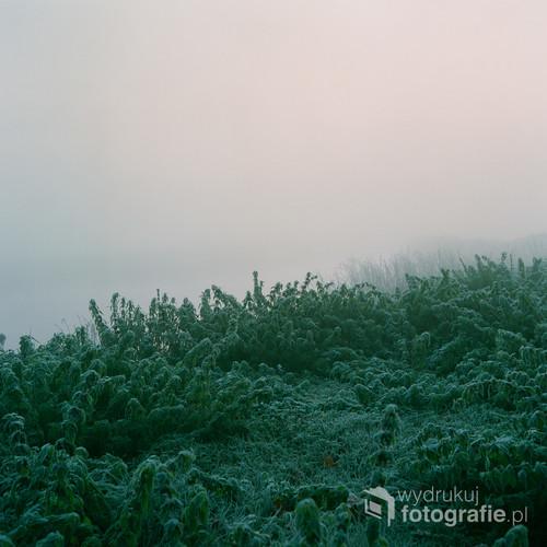 Listopad 2019 Wieliszew, woj. mazowieckie  Fotografia wykonana analogowym średnioformatowym aparatem na filmie FujiFilm NS 160PRO. Wyróżniona w międzynarodowym konkursie fotograficznym FAPA 2019 (Fine Art Photography Awards).