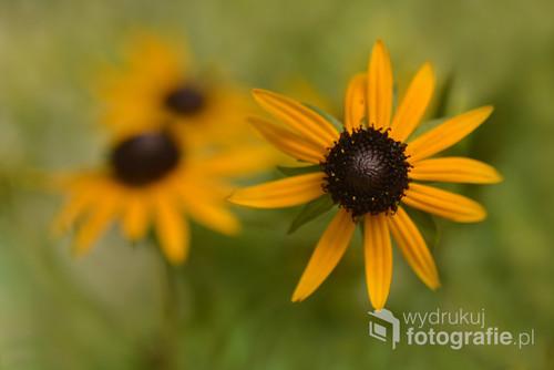 Ogrodowy kwiatek
