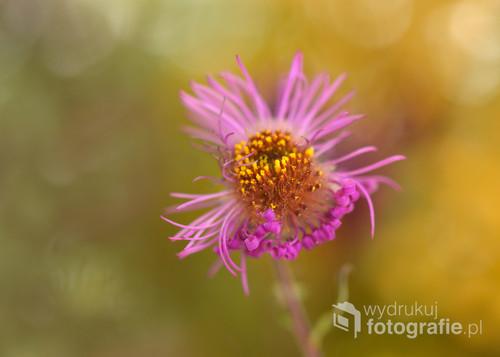 Jesienny kwiat