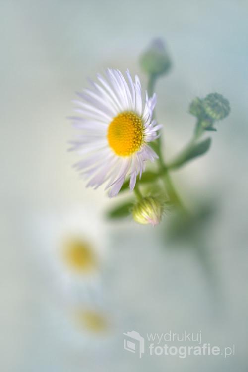 Małe kwiatki.