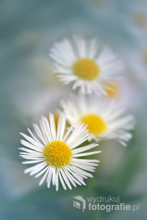 Małe kwiatki