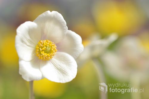 Kwiat,który najczęściej można spotkać w ogrodzie.