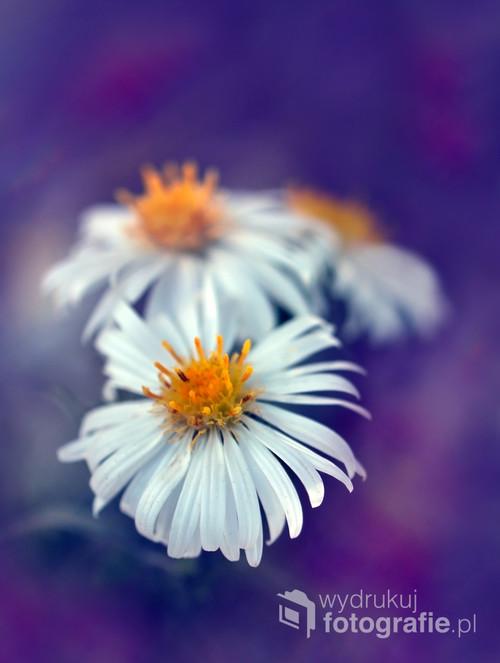 Małe kwiatki,zdobiące ogrody i łąki.