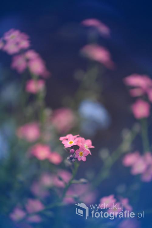 Śliczne wiosenne kwiatki.