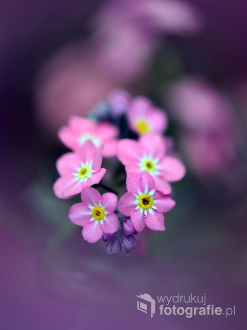 Wiosenne kwiatki.