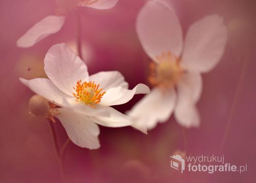 Biały kwiat.