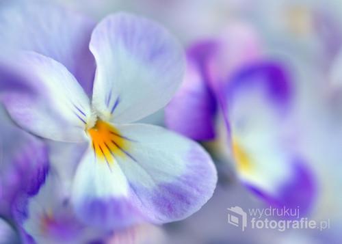 Piękne,o różnych barwach kwiaty.Zdjęcie zostało zrobione obiektywem makro 90mm.  .