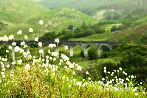 Zdjęcie zrobione podczas wiosennego zwiedzania Szkocji.