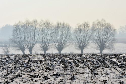 Zdjęcie zrobione podczas zimowego, mroźnego poranka na Podlasiu.