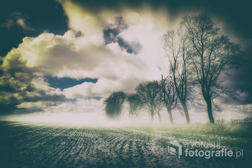 Poranna mgła nad polami niedaleko Koszalina. Mroźny sobotni poranek
