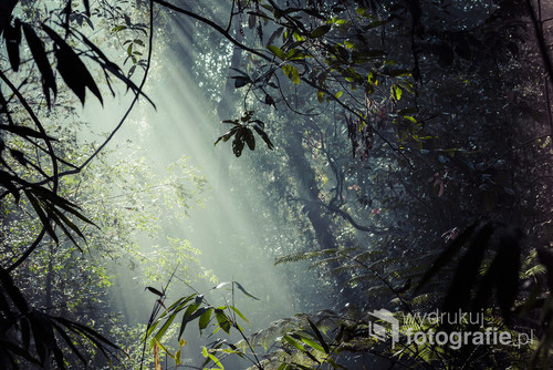 Sunlight rays pour through leaves in a rainforest at Sinharaja Forest Reserve, Sri Lanka.