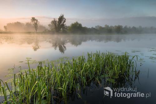 Fotografia przedstawi wiosenny poranek nad rzeką.