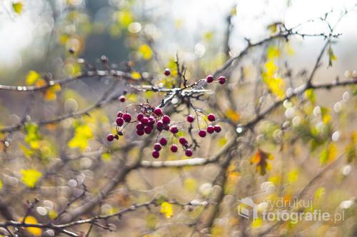 Jesień to feeria barw i ciepłego światła, które warto zatrzymać na dłużej...