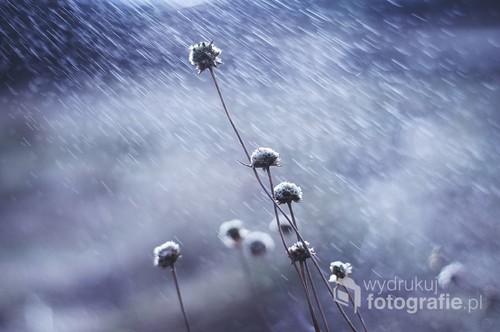 Monochromatyczne, nostalgiczne ujęcie traw w odcieniach niebieskiego