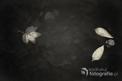 Fotografia zrobiona w parku oliwskim w Gdańsku. Nagrodzona wyróżnieniem w internetowym jesiennym konkursie organizowanym przez firmę zajmującą się sprzedażą oprogramowania graicznego