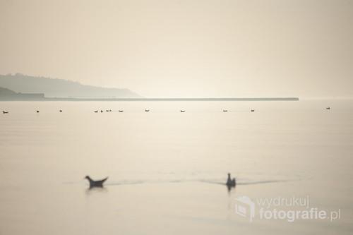 Ptaki w słoneczny dzień wypoczywają na wodzie