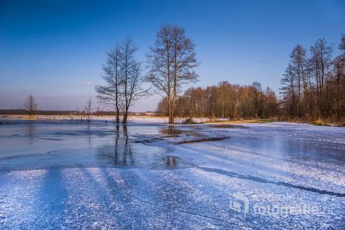 Zdjęcie przedstawia zamarzające wylewiska rzeki Narew. Zostało wykonane we wsi Pniewo znajdującej się na terenie Łomżyńskiego Parku Krajobrazowego Doliny Narwi.