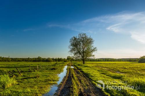 Wiosenne popołudnie na nadnarwiańskich łąkach
