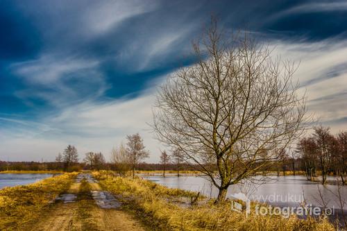 Zdjęcie wykonane w przedwiosenne popołudnie w Dolinie Narwi na terenie Łomżyńskiego Parku Krajobrazowego