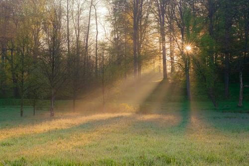 Zdjęcie przedstawia bardzo wczesny poranek w parku w Bukowcu (okolice Jeleniej Góry). Z każdą chwilą mgły się unoszą i powoli zanikają w promieniach wschodzącego słońca.