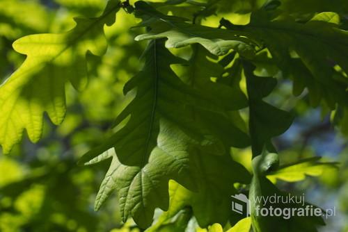 Zdjęcie zrobione wiosną w jednym z warszawskich parków. Zabawa słońca i liści.