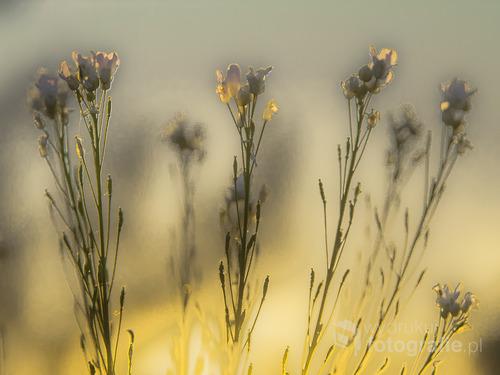 łąka w świetle zachodzącego słońca