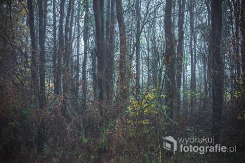 Czasem aby zrobić ciekawe zdjęcie nie trzeba jeździć wiele kilometrów od domu. Tak właśnie jest z tym zdjęciem które zostało wykonane blisko mojego domu w niewielkim lesie, gdzie dzięki unoszącej się w tym dniu mgle może było uzyskać trochę tajemniczy i baśniowy obraz.