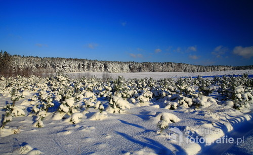 Lasy i pola Kaszubskie