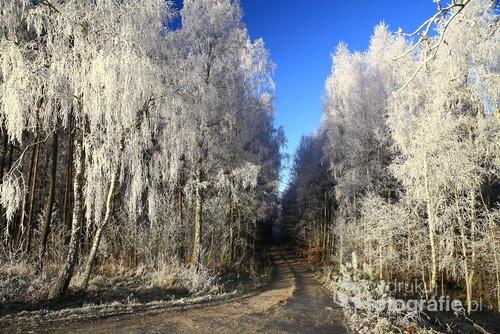 Leśna droga na Kaszubach w okolicy Jasień gm.Czarna Dąbrówka.Zdjęcie zrobiłem rano 20.12.2017
