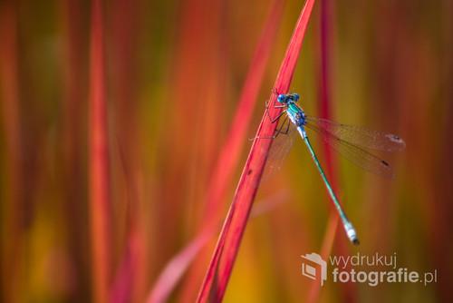Ważka sfotografowana na łonie natury.