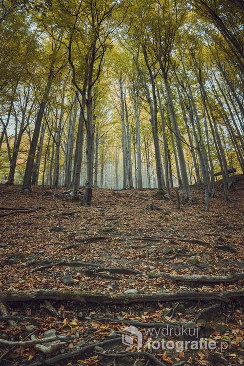 Zdjęcie zostało wykonane podczas pieszej wędrówki zaczynającej się w Cygańskim Lesie.