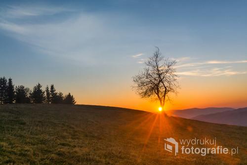 Zdjęcie samotnego drzewa zostało wykonane w Koniakowie na Ochodzitej podczas zachodu słońca.