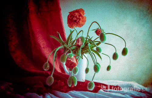 Still life with bouquet poppies flower