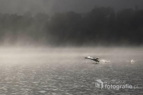 Zdjęci wykonałam nad jeziorem Białym w Augustowie