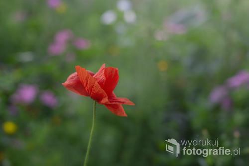 Fotografia została  wykonana na kwiatowej łące