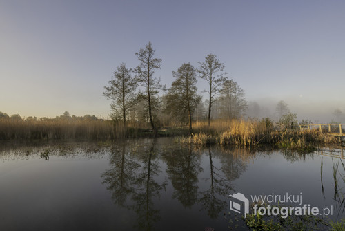 Fotografię wykonałam na Podlasiu, nad rzeką Narwią.