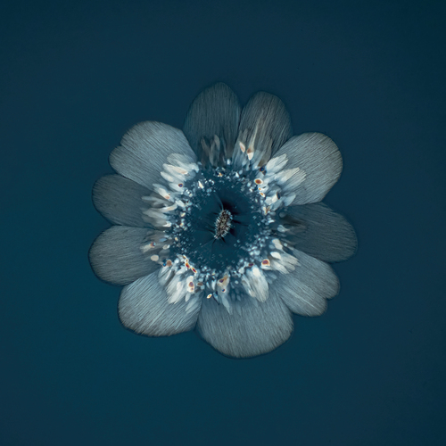 Kwiat powstały w wyniku krystalizacji aminokwasu.