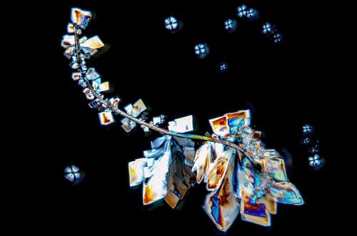 Czasem zupełny przypadek sprawia, że zwykłe zdjęcie kryształów cukru staje się wyjątkowe. Podczas, procesu krystalizacji, zapomniałem, zamknąć pojemnika i na szkiełko wpadło mikro włókno. Sprawiło ono, że zaczęły przy nim tworzyć się kryształy.