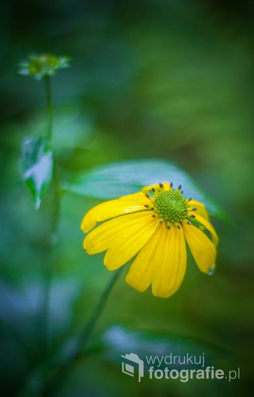 Zielono-żółta kompozycja prosto z Bieszczadzkiego Parku Narodowego .