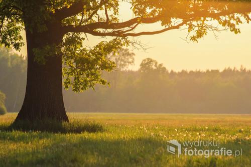 Ulubione drzewo w majowym słońcu