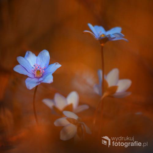 Najpiękniejsze kwiaty wiosny w pomarańczy zanurzone