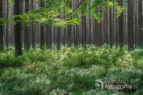 Las w okolicach Stilo