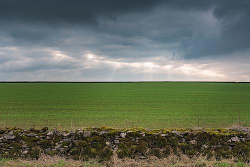 Widoczek na pola uprawne w Somerset, UK.