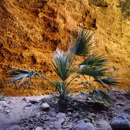 Wąwóz kolczatki, to szczelina znajdująca się w wśród niezwykłych formacji skalnych australijskiego parku narodowego Purnululu. Wąwóz rzeźbiony wodą przez miliony lat, ma głębokość dwustu metrów. Tylko kilka chwil w ciągu dnia ma światło słoneczne by zajrzeć w głąb. W najwęższym miejscu można jednocześnie dotknąć przeciwległych ścian wąwozu. U wejścia, gdzie światła jest nieco więcej przycupnęła szeleszcząca na wietrze, karłowata palma. Pomarańczowy kolor skał jest charakterystyczny dla gór Bungle Bungle.